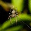 家庭や地域の経済格差は、家の中の蜘蛛にも表れる!?