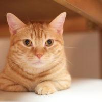 """にゃんとも驚く猫ブーム! """"ネコノミクス""""なる経済効果たるや、いかに?"""