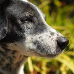 ペット保険は得か損か。愛犬の生涯を通じて検証してみた