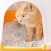 飼い主の高齢化でペット減少するも、堅実に拡大し続ける「ペットビジネス」